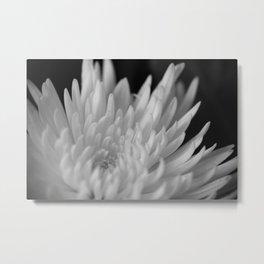 White Chrysathemum Metal Print