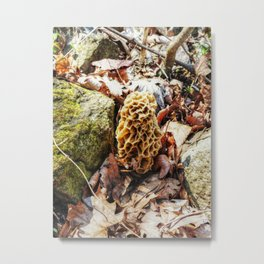Morel Mushroom in the Wild Metal Print