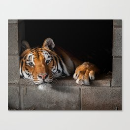 Cincinnati in His Den Canvas Print