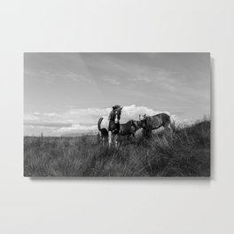 Black and White Horses in Iceland Metal Print