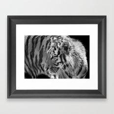 Tiger Cub 2 Framed Art Print