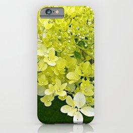 Elegant Chartreuse Green Limelight Hydrangea Macro iPhone Case