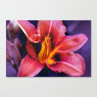lily Canvas Prints featuring  Lily. by Mary Berg