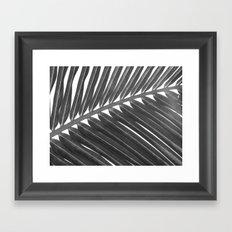palm 2 Framed Art Print