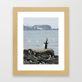 Chinstrap Penguins, Antarctica 2006 Framed Art Print