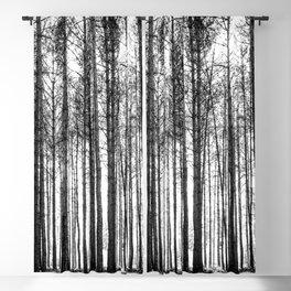 trees in forest landscape - black and white nature photography Blackout Curtain