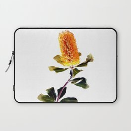 Beautiful Australian Banksia Flower Laptop Sleeve