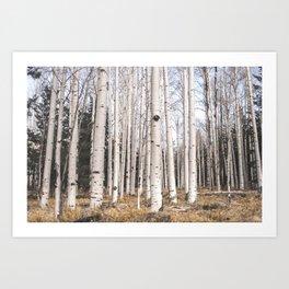 Trees of Reason - Birch Forest Art Print