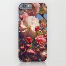 Blossoms in Beijing iPhone 6s Slim Case
