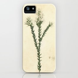 Andersonia sprengelloids (Pink swamp heath) by W. Buelow Gould iPhone Case