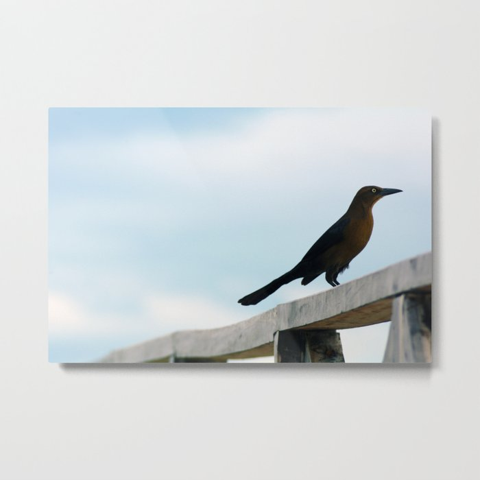 Bird collection _ 01 Metal Print