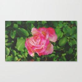 Rose 0001 Canvas Print