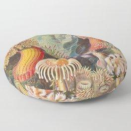 Ernst Haeckel Sea Anemones Vintage Illustration Floor Pillow