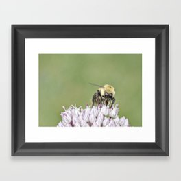 Busy Bee Framed Art Print