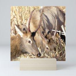 Watercolor Elk Juvenile 10, Square-Off Mini Art Print