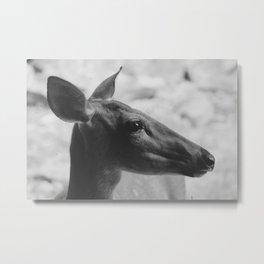 Profile Metal Print