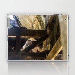 Angkor Wat Long-Tailed Macaque (Monkey), Cambodia Laptop & iPad Skin