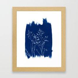 Limonium Cyanotype, Herbal Sunprint, Solar Herbalism Framed Art Print