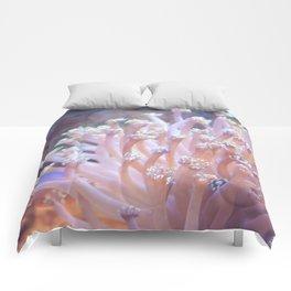 Anemone (?) Comforters