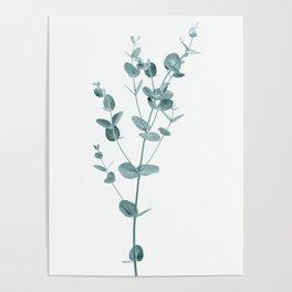 Minimal Eucalyptus Poster