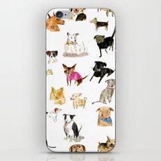 adopt a dog iPhone & iPod Skin