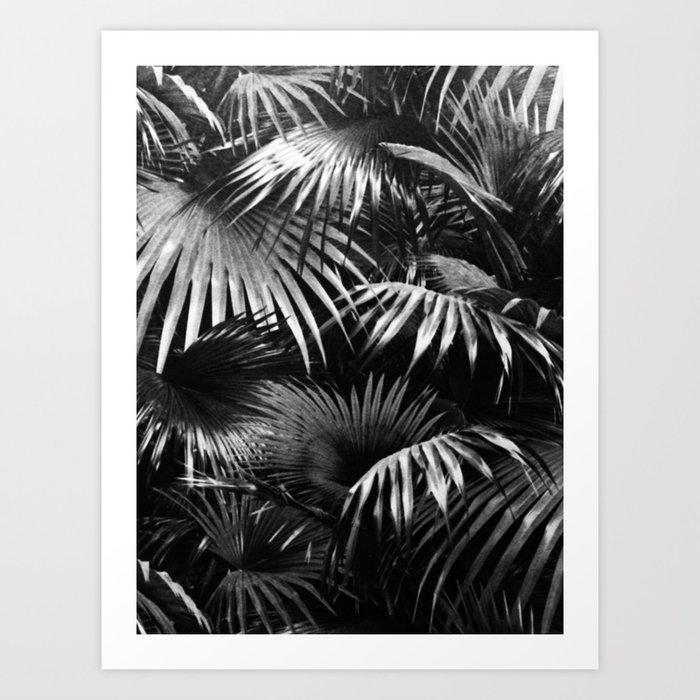 Tropical Botanic Jungle Garden Palm Leaf Black White Kunstdrucke