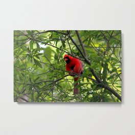 Red Says I See You Metal Print