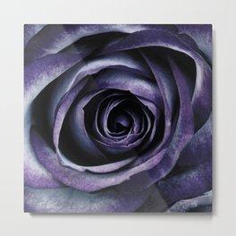 Blue Purple Rose Flower Metal Print