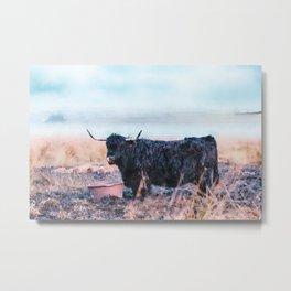 Black highlander cow watercolor painting Metal Print