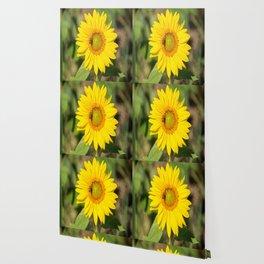 Field of Sunflower-5 Wallpaper