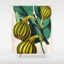 Fig plant, vintage illustration Shower Curtain