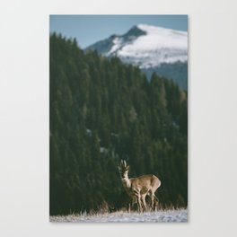 Hello spring! - Landscape and Nature Photography Canvas Print
