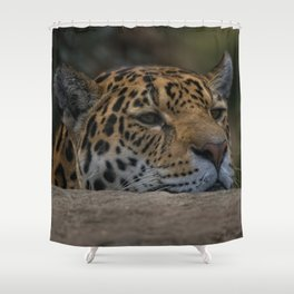 Jaguar Peeking Over The Wall Shower Curtain