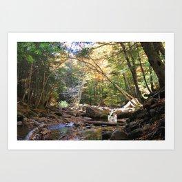 Lye Brook Falls trail Art Print