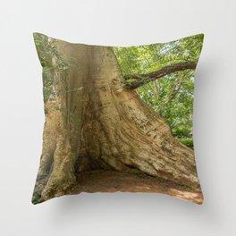 Angkor Thom Fig Tree, Siem Reap, Cambodia Throw Pillow