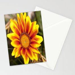 Southern African ❁ Yellow Gazania Flower  Stationery Cards