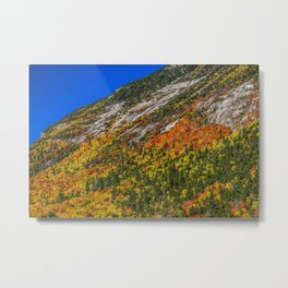 Foliage on the Mountain Metal Print