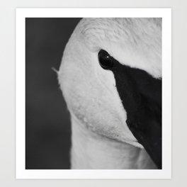 Trumpeter Swan | Wildlife Photography | Birds | Nature | Black and White | Portrait Art Print
