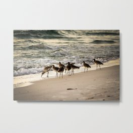 Birds on the Beach of Anna Maria Island Metal Print