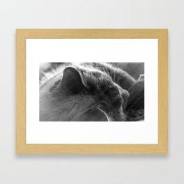 The Cat 5 Framed Art Print