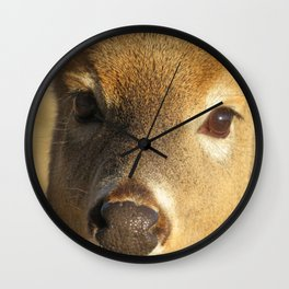 WHITE TAIL DEER (1 of 3) - CLOSEUP OF FACE Wall Clock