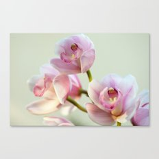 Cymbidium orchid 9770 Canvas Print