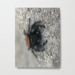 Cute and Fluffy Metal Print