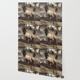 Young Elk Bucks   -  Banff Alberta Wallpaper