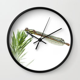 Damselfly resting on green plant Wall Clock