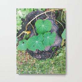 nature uk Metal Print