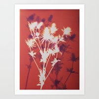 Photogram - Seaholly in Red Art Print