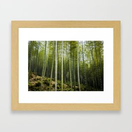 Bamboo Forest in Green Framed Art Print