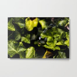 The Web And The Snail Metal Print