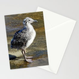 Ring-billed Gull Chick Stationery Cards